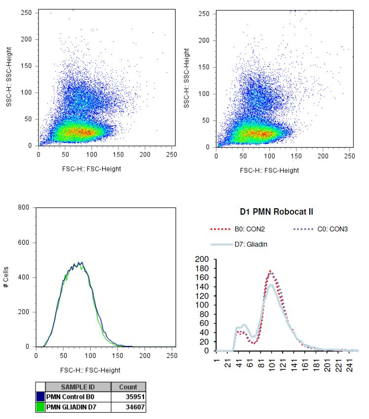 Charted results of donor 1 Polymorphonuclear (PMN) cells when exposed to gliadin