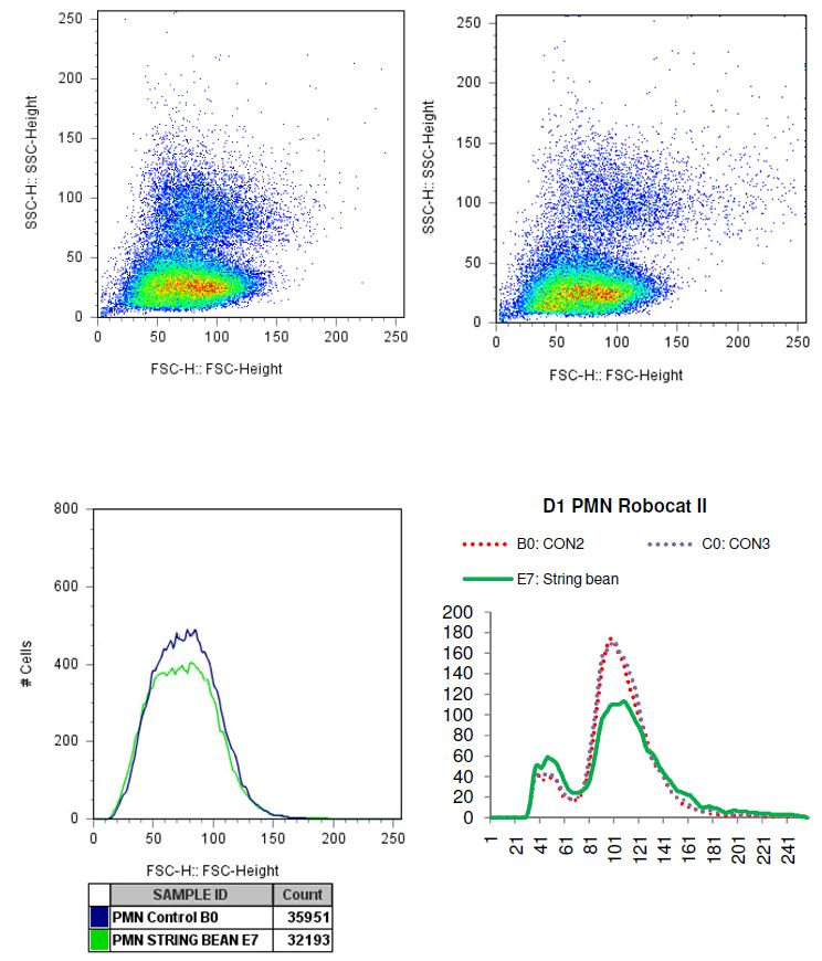 Charted results of donor 1 Polymorphonuclear (PMN) cells when exposed to string bean