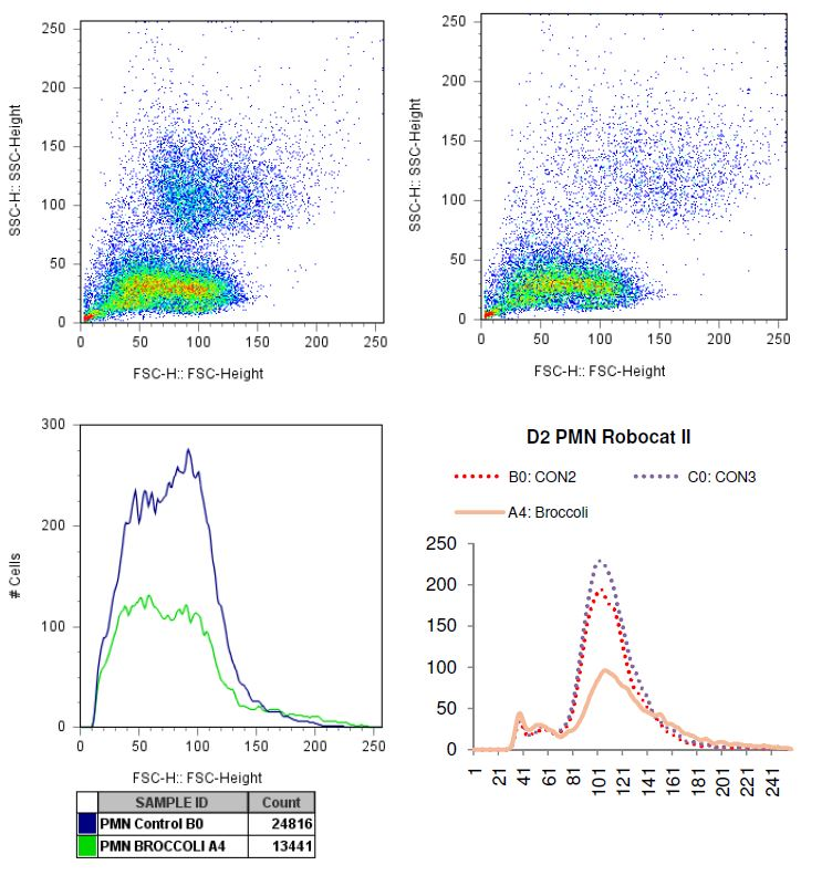 Charted results of donor 2 polymorphonuclear (PMN) cells when exposed to broccoli