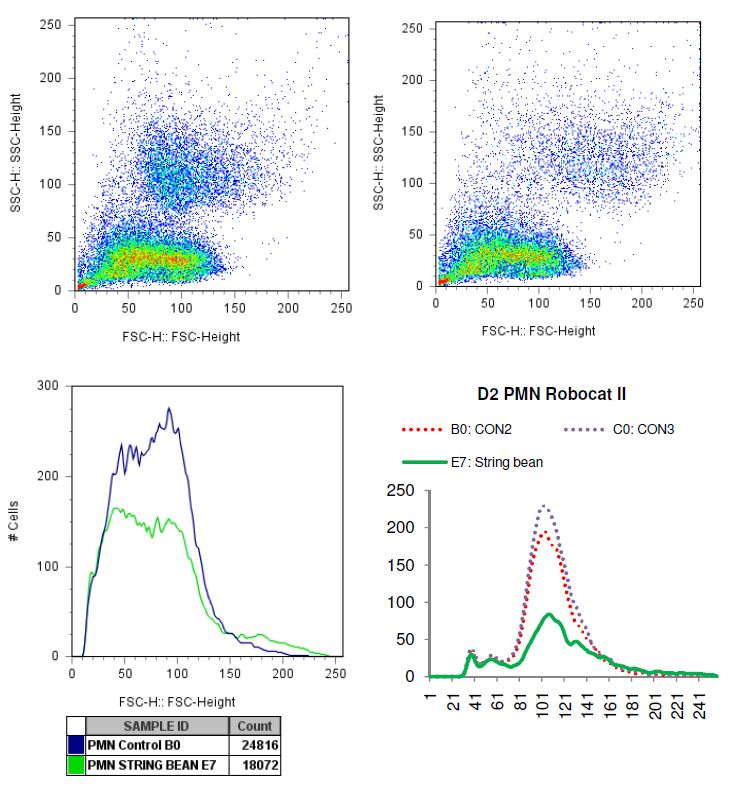 Charted results of donor 2 polymorphonuclear (PMN) cells when exposed to string bean
