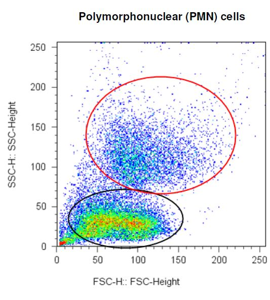FSC/SSC plot of Polymorphonuclear (PMN) cells