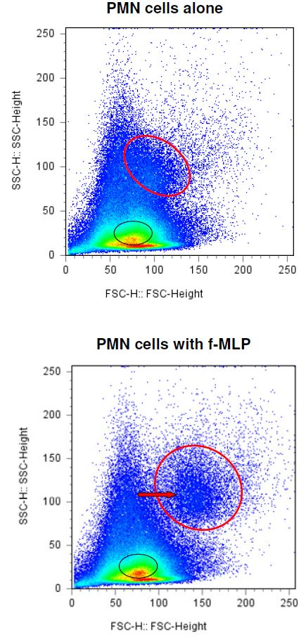 FACSCalibur results of PMN cells treated with f-MLP